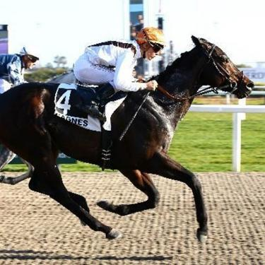 French Fast Track winner Volfango books his place in the Mile Final at Lingfield Park on Good Friday.