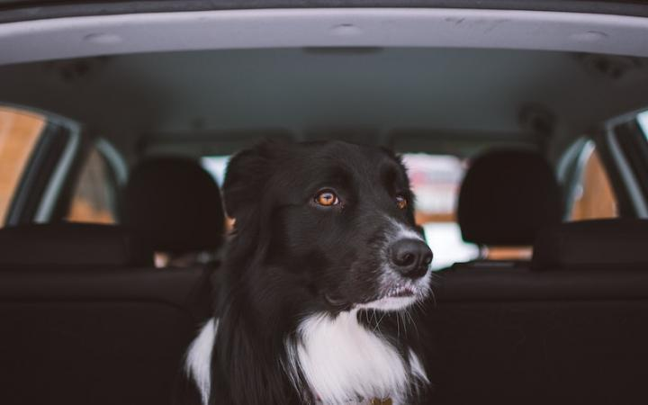 Drivers Risk £2,500 Fine for Not Restraining Pets in Cars